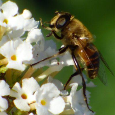 Foods That Heal - Bee Pollen (Propolis)